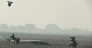 rajasthan-birdsanctuary